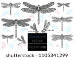 dragonfly spring set sketch... | Shutterstock .eps vector #1105341299