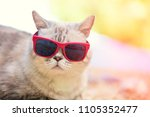 portrait of cat wearing... | Shutterstock . vector #1105352477