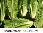 fresh group of lettuce from... | Shutterstock . vector #110543291