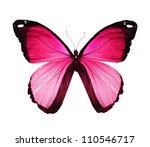 Stock photo morpho pink butterfly isolated on white 110546717