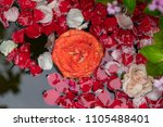 rose leaves floating on the... | Shutterstock . vector #1105488401