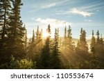 sunny beams in forest | Shutterstock . vector #110553674