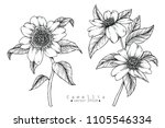 sketch floral botany collection.... | Shutterstock .eps vector #1105546334
