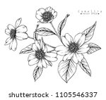 sketch floral botany collection.... | Shutterstock .eps vector #1105546337