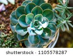 cactus succulents outdoor... | Shutterstock . vector #1105578287