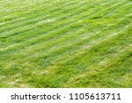 freshly cut  in even rows  a... | Shutterstock . vector #1105613711