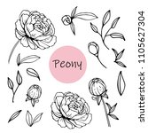 set of peony flowers  bud ... | Shutterstock .eps vector #1105627304