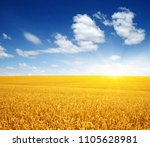 wheat field and sun in the sky  | Shutterstock . vector #1105628981