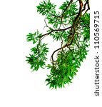 green leaves and branches on... | Shutterstock . vector #110569715