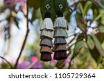 statement earrings hung in a... | Shutterstock . vector #1105729364