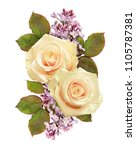 white roses and lilac flowers...   Shutterstock . vector #1105787381