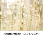 Flower Grass At Relax Morning...