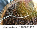 fried insects  bugs fried on... | Shutterstock . vector #1105821497