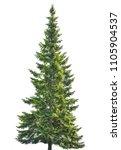 single fir isolated on white... | Shutterstock . vector #1105904537