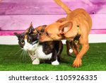 Small photo of Dog kissing Cat
