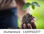 hands of farmer growing sapling    Shutterstock . vector #1105932377