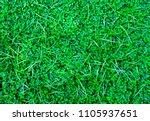 small green leaves for... | Shutterstock . vector #1105937651