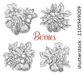 berries sketch. vector set of...   Shutterstock .eps vector #1105949009
