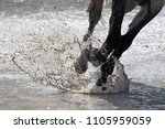 Small photo of Gallop in the water