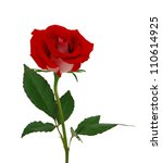 Stock photo single beautiful red rose isolated on white background 110614925
