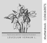detailed vector botanical... | Shutterstock .eps vector #1106163071