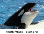 Killer Whale  Orca Whale  With...