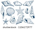 set of marine theme. Sea shells. different seashells on white background color navy peony. starfish. Vextor illustration Sketch style