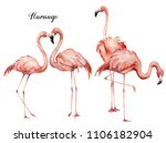 watercolor pink flamingo group...   Shutterstock . vector #1106182904