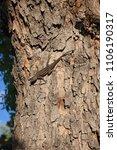brown lizard hanging onto the... | Shutterstock . vector #1106190317