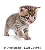 small brown kitten isolated on... | Shutterstock . vector #1106224967