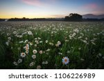 daisies in the field near the...   Shutterstock . vector #1106226989