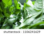 close up of basil  parsley and... | Shutterstock . vector #1106241629