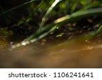 macro ground in the garden with ... | Shutterstock . vector #1106241641