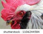portrait of colorful white... | Shutterstock . vector #1106244584