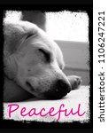 cute dog photo print design ... | Shutterstock . vector #1106247221