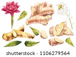 hand drawn ginger and... | Shutterstock . vector #1106279564
