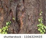 ivy ascending tree surface bark   Shutterstock . vector #1106324435