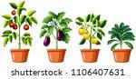 set of different plants...   Shutterstock .eps vector #1106407631