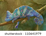 Постер, плакат: Chameleon on branch