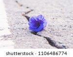 purple flowers on a rocky floor ... | Shutterstock . vector #1106486774