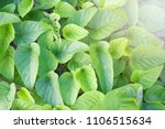 green leaves and sunny in the... | Shutterstock . vector #1106515634