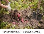 closeup of farmer's hands...   Shutterstock . vector #1106546951