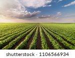 soybean field ripening at... | Shutterstock . vector #1106566934