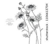 sketch floral botany... | Shutterstock .eps vector #1106613704