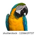 close up of blue and yellow... | Shutterstock . vector #1106619737