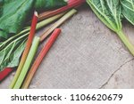 fresh rhubarb with leaves | Shutterstock . vector #1106620679