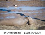 donna nook  lincolnshire  uk  ... | Shutterstock . vector #1106704304