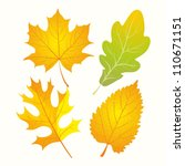 Autumn Leaves. Set Of Golden...