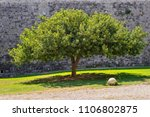one big tree with magnificent... | Shutterstock . vector #1106802875