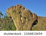 desert cacti sonora | Shutterstock . vector #1106813654